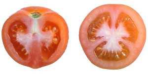 enb07456x_tomato